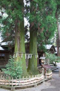 高千穂神社 夫婦杉の写真素材 [FYI03342246]