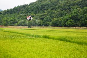 無人ヘリコプターによる農薬散布の写真素材 [FYI03342341]