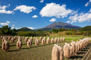 棒掛け稲と岩木山の写真素材 [FYI03342363]