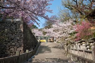 金刀羅宮の桜咲く参道の写真素材 [FYI03342453]