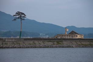 高田の松原の一本松(震災後)の写真素材 [FYI03342482]
