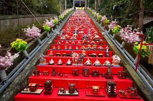 かつうらビッグひな祭り(遠見岬神社)の写真素材 [FYI03342602]