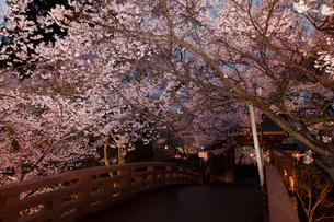高遠城址公園の夜景の写真素材 [FYI03342608]