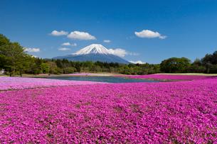冨士芝桜まつり会場より富士山を望むの写真素材 [FYI03342640]