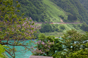 宇奈月ダム湖からのトロッコ電車の写真素材 [FYI03342645]