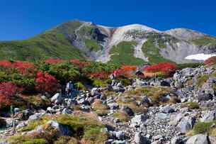 紅葉の乗鞍高原より乗鞍岳を望むの写真素材 [FYI03342727]
