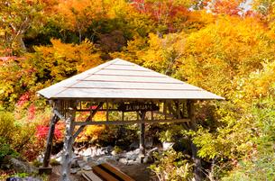 八甲田山麓紅葉のまんじゅうふかしの写真素材 [FYI03342746]