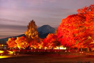 紅葉の河口湖もみじ回廊の夜景の写真素材 [FYI03342793]