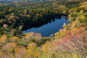 八幡平アスピーテラインより八幡平山麓熊池を望むの写真素材 [FYI03342988]