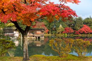 金沢 紅葉の兼六園を遊歩道より望むの写真素材 [FYI03343023]