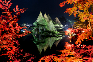 金沢 遊歩道よりライトアップの兼六園を望むの写真素材 [FYI03343038]