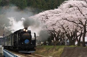 桜咲く釜石線を走るSL列車の写真素材 [FYI03343162]