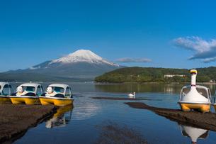 山中湖畔より富士山を望むの写真素材 [FYI03343204]