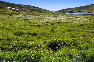 チングルマ咲く駒ケ岳登山道より阿弥陀池,小屋を望むの写真素材 [FYI03343205]