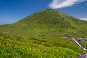 秋田駒ケ岳,ニッコーキスゲ咲く横岳稜線より駒ケ岳,を望むの写真素材 [FYI03343310]