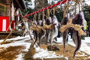 掛魚まつり 金浦山神社に奉納されたたらの写真素材 [FYI03343422]