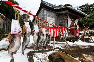 掛魚まつり 金浦山神社に奉納されたたらの写真素材 [FYI03343458]