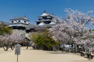 桜咲く松山城本丸広場より天守閣を望むの写真素材 [FYI03343525]