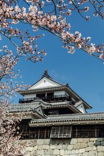 桜咲く松山城本丸広場より天守閣を望むの写真素材 [FYI03343527]