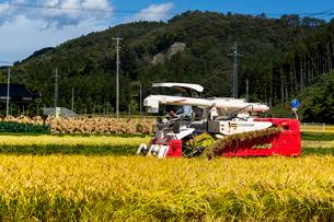 コンバインによる稲刈り作業風景の写真素材 [FYI03343672]