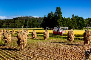 コンバインによる稲刈り作業風景の写真素材 [FYI03343680]