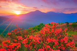 ガボッチョから望むレンゲツツジと蓼科山などの山並みと朝日の写真素材 [FYI03343882]