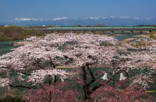 北上展勝地,桜咲く陣ヶ丘展望所付近より東北新幹線を望むの写真素材 [FYI03343960]