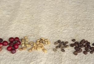コーヒー豆の製品化までの過程の写真素材 [FYI03344111]