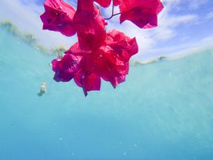 TAHITI 海中の花の写真素材 [FYI03344160]