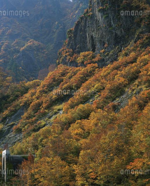 秋の六十里越峠にての写真素材 [FYI03344297]