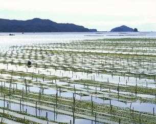 五ヶ所湾の海苔網の写真素材 [FYI03344327]