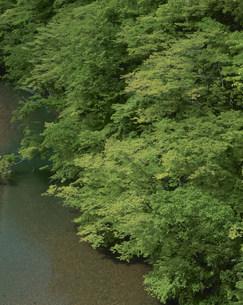 新緑の真湯渓谷の写真素材 [FYI03344421]