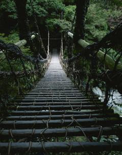 祖谷のかずら橋の写真素材 [FYI03344586]