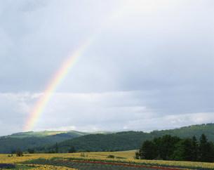 虹と美瑛のお花畑の写真素材 [FYI03344598]