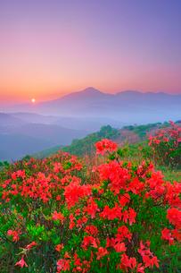 ガボッチョから望むレンゲツツジと蓼科山などの山並みと朝日の写真素材 [FYI03344674]