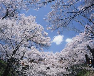高遠城址公園の写真素材 [FYI03344712]