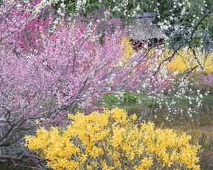 花咲く木々の写真素材 [FYI03344877]