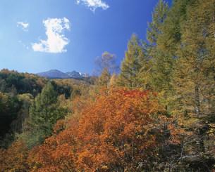 乗鞍高原の紅葉と北アルプスの乗鞍岳の写真素材 [FYI03344992]