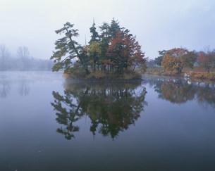 針湖池の小島の紅葉の写真素材 [FYI03345013]