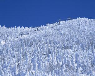 冬の志賀高原の樹氷と横手山スキー場の写真素材 [FYI03345116]