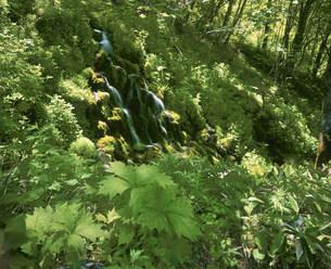 初夏の湯の丸高原の五郎の滝の写真素材 [FYI03345143]