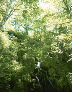 初夏の湯の丸高原の五郎の滝の写真素材 [FYI03345153]