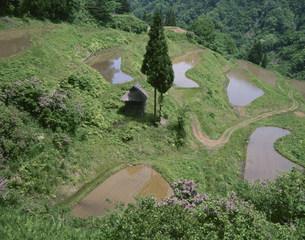 田植えの済んだ山間の棚田の写真素材 [FYI03345165]
