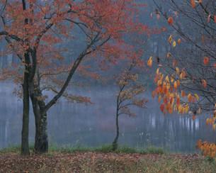 針湖池の紅葉の写真素材 [FYI03345201]