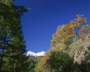冠雪の乗鞍岳と紅葉の写真素材 [FYI03345215]