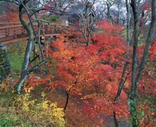 高遠城址公園の紅葉の写真素材 [FYI03345503]