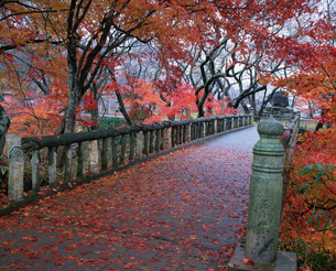 高遠城址公園の紅葉の写真素材 [FYI03345512]