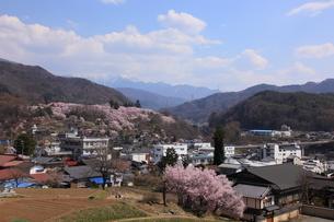 高遠城址公園の桜を望むの写真素材 [FYI03345580]