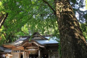 高千穂神社の写真素材 [FYI03345794]