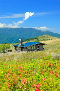 霧ヶ峰高原のレンゲツツジと山小屋と美ヶ原の山並みの写真素材 [FYI03346447]